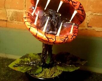 venus flytrap monster plant - man eating plant - little shop of horrors plant - carnivorous monster plant - eclipse sun monster plant