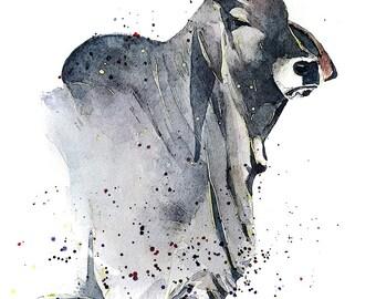 "Grey Brahman 2 "" Print Watercolour A3 (30*40cm/16*12 Inches)"