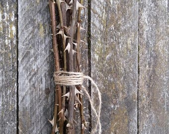 Wild Rose Thorned Branches Natural Thorny Twigs Sticks With Thorns Prickly  Dried Stems Botanical Rustic Home
