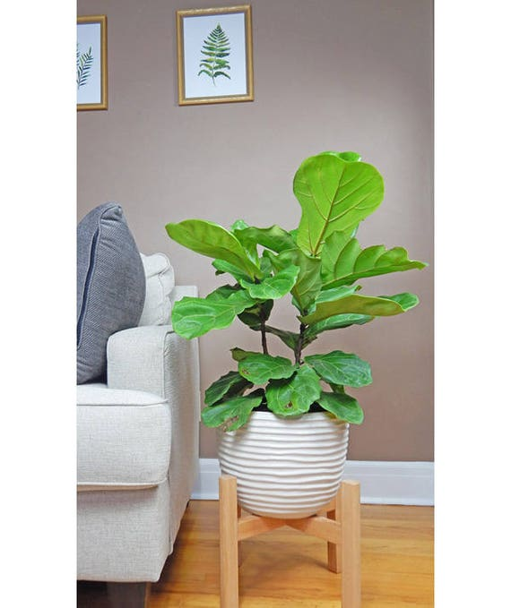 gro e pflanze stand mid century modern bertopf modern holz. Black Bedroom Furniture Sets. Home Design Ideas