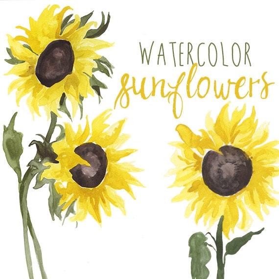 Watercolor Sunflower Clip Art Floral Summer Clipart Corner Page Sun Clipart