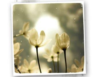 Fleurs délicates #1  - photo d'art 20x20cm - Des photos sur la Nature