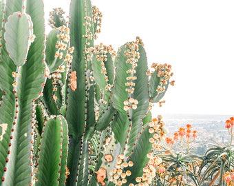 Cactus Print // Cactus Wall Art Los Angeles California // Modern Photography - Cactus Print Green & Orange Flowers
