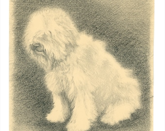 Charcoal drawing, Dog art, Dog portrait, Sheepdog, Animal art, Vintage art, Fine art print- Maggie: Study in Charcoal #3
