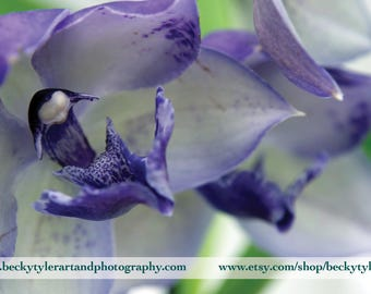 Purple Cymbidium Orchid Photo Print