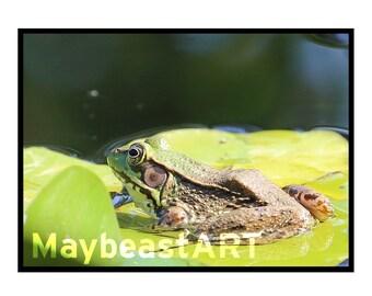 Frog on Lily Print