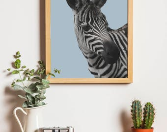 Blue Zebra Downloadable Print