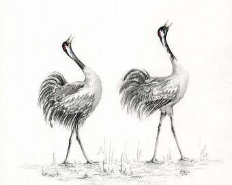 Calling Cranes - Print from an Original Drawing
