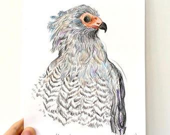 African Harrier Hawk original drawing illustration