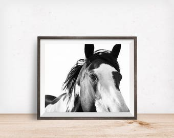 Paint Horse Photograph in Black and White, Close Up Horse Photo, Physical Print