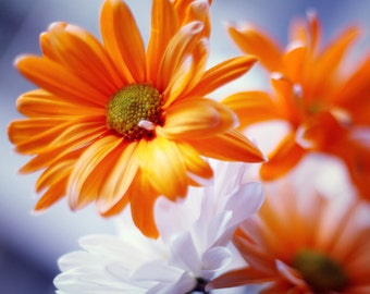 White and Orange - 8x10 Fine Art Photograph