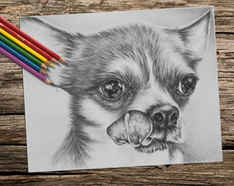 Printable coloring page, Adult Coloring Page, Instant download coloring, , chihuahua coloring page, coloring pages, coloring book for adults