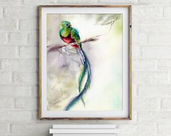 Quetzal Art Print, bird print, watercolor print, birdwatercolour painting print, bird art, bird wall print art