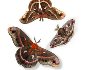 Cecropia Moths and Emperor Moth Papercut Decorations