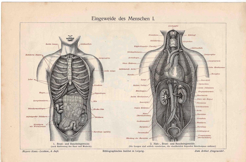 Beste Aufsteigende Aorta Anatomie Fotos - Anatomie Ideen - finotti.info