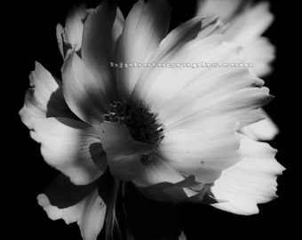 Set of 4 Black and White Prints, FLOWER PHOTOGRAPHY SET, Nature  Art Decor, 12 x 12 inch Ready for Ikea Ribba Pre-matted  20x20 inch Frame.