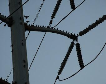 Coming and Going - bird photograph - urban nature flight twilight power line