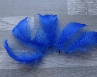 Royal Blue set of 50 colored goose feathers