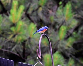BLUEBIRD NOTECARDS-20