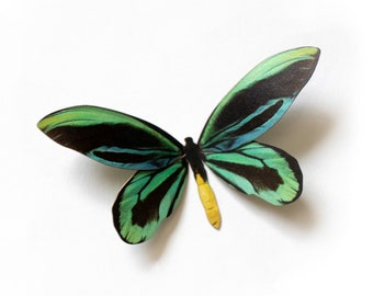 Ornithoptera alexandrae butterfly - Moth of the Month - May