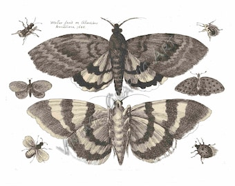 Two Moths and Six Insects  Clip Art Vintage Digital Download Illustration for Card Making Printable Wall Art Prints 040