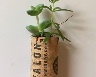 Cork Succulent , Party Favors ,Wine Cork Succulent ,Garden