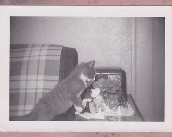 Vintage Photo, Kitten Exploring Roses, Vernacular, Cat, Feline, Indoors, Vintage Knick Knacks, Sofa, Radio, Plant, Animal, Pet, Cute