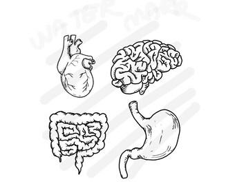 Heart + Brain + Stomach + Intestine - Human Organ - JPG/SVG Hand Drawing - Instant Download