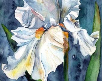 White Iris Watercolor Giclee Print Iris Art Irises Iris Decor Flower Wall Hanging Floral Decor Iris Lover
