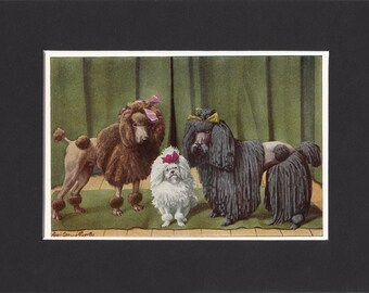 """Poodles Print 1919 Vintage Dog Print by Louis Agassiz Fuertes Small Picture Mounted + Mat 8"""" x 6"""" Print"""