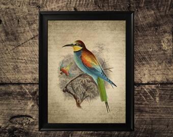 Vintage bee eater print, bird print, room decor, vintage bird wall art,bird printable art