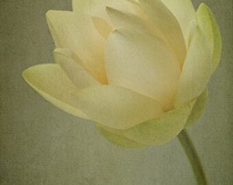 Lotus Blossom I - 4x6 Fine Art Photograph