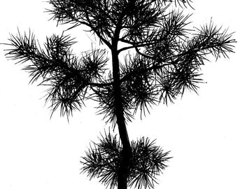 botanical greeting cards- pine tree drawing printed on linen paper- greeting cards