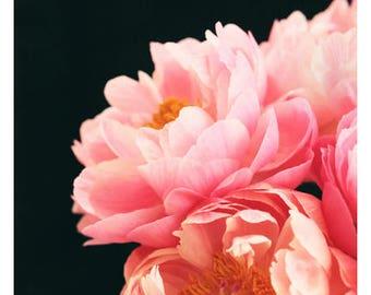 Nature Photograph - Peony Photograph - Flower Art - Spring Art - Haute Couture #2 - Fine Art Photograph - Floral Art - Botanical Art Print