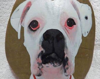 White Boxer Pup