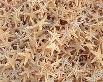 "50 Tiny Starfish for Crafting or Decorating - 1/4"" - 3/4"" Beach Decor star fish"