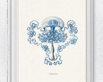 Jelly fish Anthomedusae in blue Poster print Seaside art , sea life print, wall decor Jellyfish, natural sea life SAS178