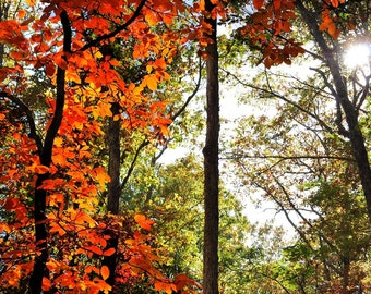 Pennsylvanian Autumn Forest Photo, HDR photograph, Orange, red, green, and gold, fine photography prints, Pennsylvanian Autumn