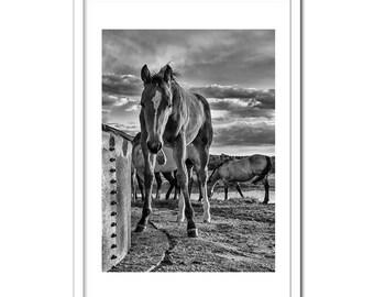 Black & White Foal