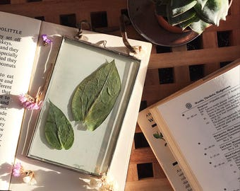 Hanging Glass Frame with Pressed Leaves
