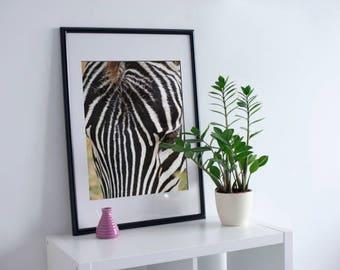 Digital Print - Zebra Up Close, Tanzania