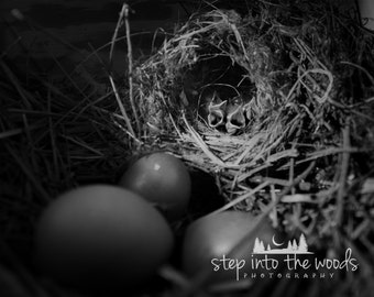 Baby Birds in Nest; Bird House, Country Home Decor, Bird Print, Bird House, Farm House Decor, Black and White, Nature Photography