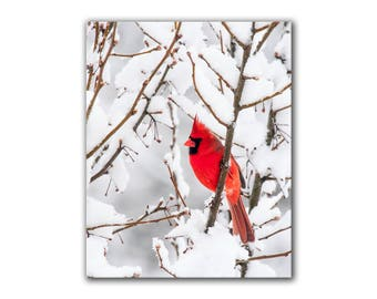 Red cardinal bird in snow, winter landscape photography, fine art nature snow photography, cottage chic home decor, greenpix wildlife print