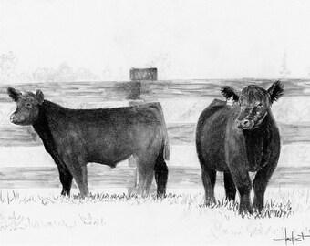 "Show Cattle, ""Curious Club Calves"" Artwork Print"