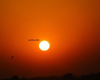 Sunset with orange sky and a bird