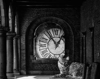 Dark Surreal Photography, Alice in Wonderland Inspired, Cheshire Cat, Black and White, Fairytale, Fantasy, Home Decor - In The Darkest Hour
