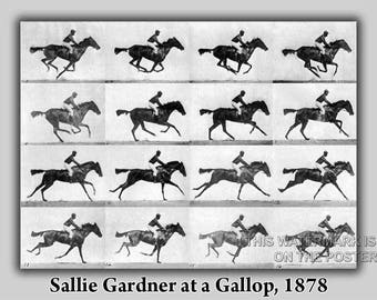 Poster, Many Sizes Available; Sallie Gardner At A Gallop Eadweard Muybridge 1878