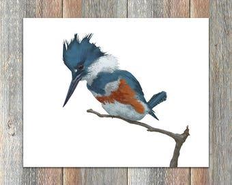 Belted Kingfisher Bird Print