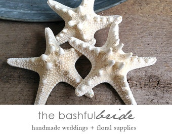 Starfish, set of 3, starfish decor, beach wedding, beach decor, white starfish, 3-inch, 4-inch