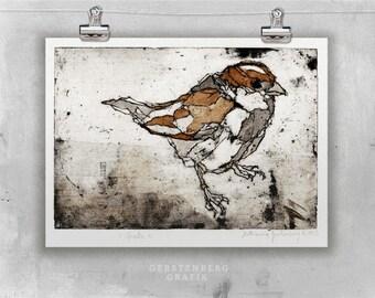 Original etching SPARROW    fine art etching, bird prints, original art, sparrow drawing, bird art    watercolor print illustration